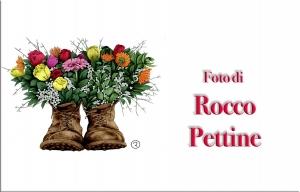 Rocco Pettine